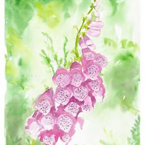 Finding Foxgloves Print
