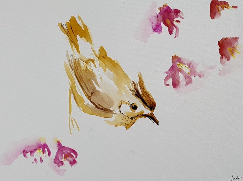 Watercolour illustration of bird