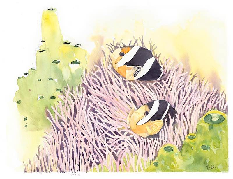 Illustration of clown fish in reeds